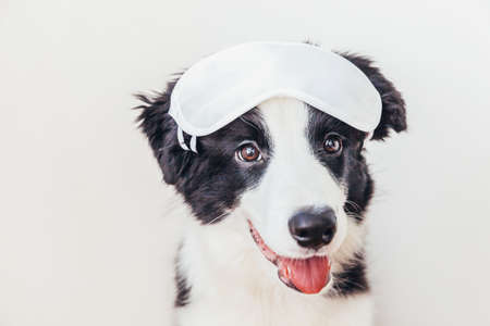 Do not disturb me, let me sleep. Funny cute smiling puppy dog border collie with sleeping eye mask isolated on white background. Rest, good night, siesta, insomnia, relaxation, tired, travel concept Stock fotó