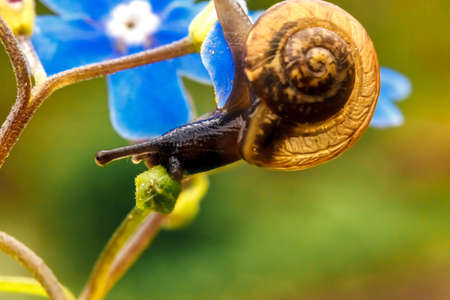 Snail closeup portrait. Little snail in shell crawling on flower and green leaf in garden. Inspirational natural floral spring or summer background. Life of insect. Macro close up