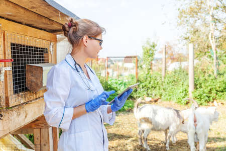 Young veterinarian woman with tablet computer examining goat on ranch background. Vet doctor check up goat in natural eco farm. Animal care and ecological livestock farming concept