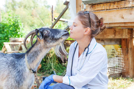 Young veterinarian woman with stethoscope holding and examining goat on ranch background. Young goat with vet hands for check up in natural eco farm. Animal care livestock ecological farming concept 스톡 콘텐츠