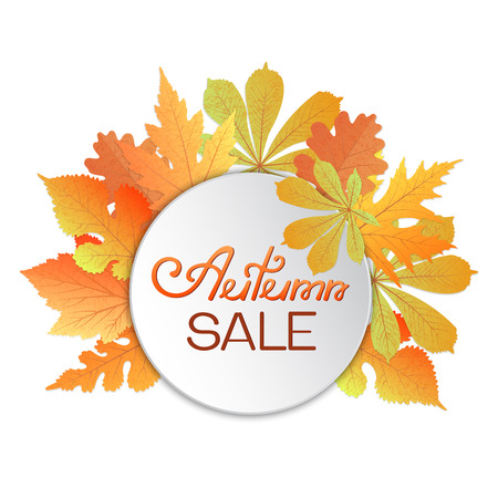 Leaves of chestnut, oak, currant, mulberry, maple. Advertising discount banner Autumn sale hand drawn.