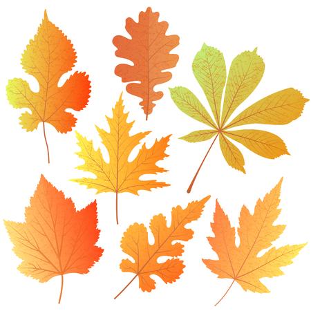 秋のセットは、オーク、メープル、桑の実、カシス、栗の葉します。先生、感謝祭の日、オクトーバーフェストにご挨拶の設計要素の装飾