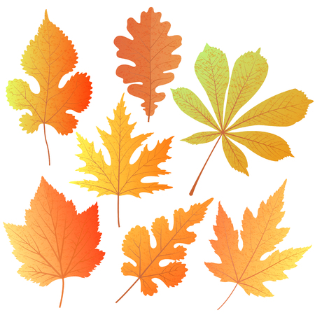 A set of autumn leaves of oak, maple, mulberry, currant, chestnut. Element decor for the design of greetings to Teachers, Thanksgiving Day, Oktoberfest Stock Photo