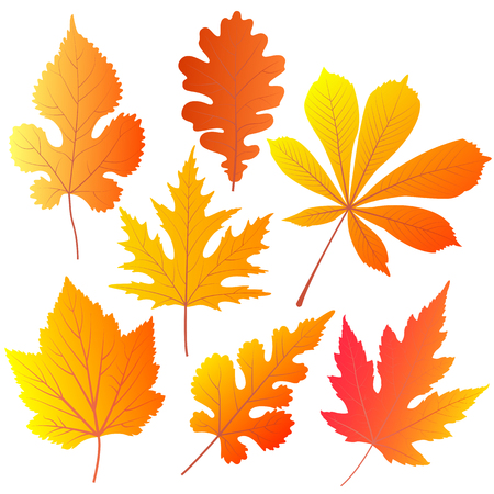 Autumn leaves of chestnut, oak, currant mulberry maple Çizim