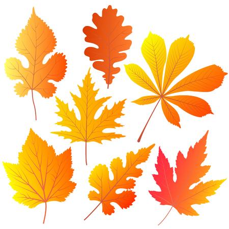 Autumn leaves of chestnut, oak, currant mulberry maple Illustration