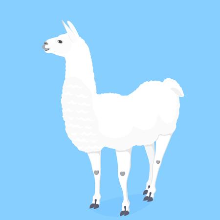Funny llama vector illustration for poster, nursery, t-shirt design. Cute cartoon alpaca. Invitation, birthday card Foto de archivo - 126770380