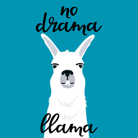 No drama llama hand drawn lettering. Adorable alpaca shows teeth. Portrait of smiling guanaco