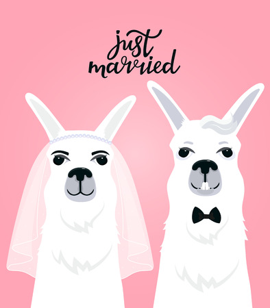 Couple llamas newlyweds. Bride in veil. The groom in a bow tie. Hand lettering just married.