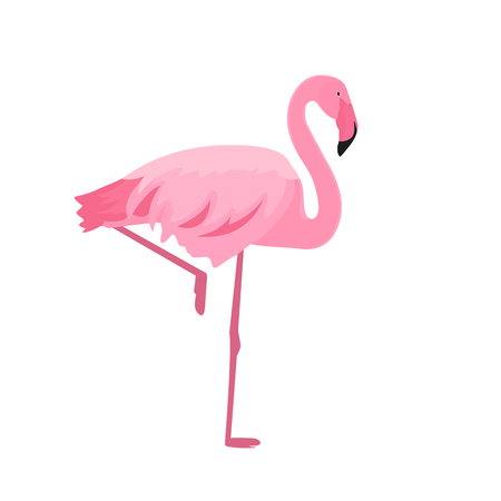 Pink flamingo stands on thin legs on a white Illusztráció