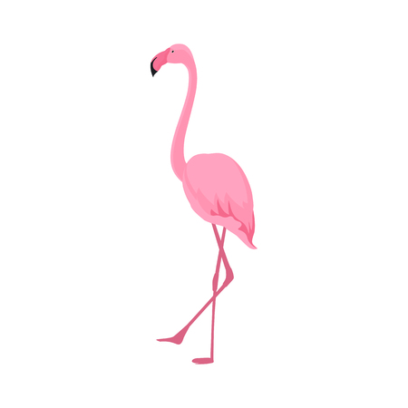 Pink flamingo stands on thin legs on a white background. Tropical design.