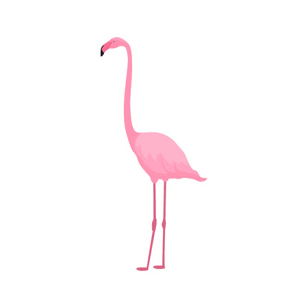 Pink flamingo stands on thin legs on a white background. Tropical summer design Illusztráció