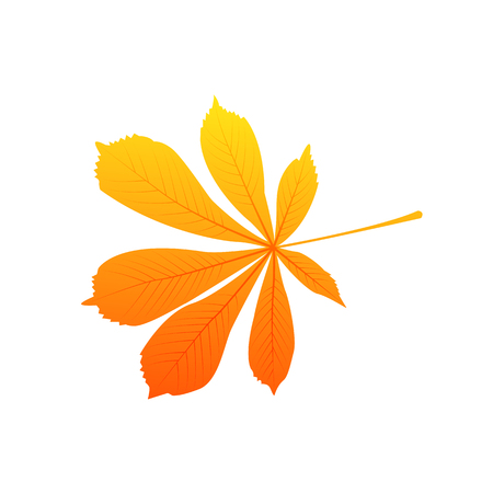 Chestnut autumn leaf vector isolated on white background
