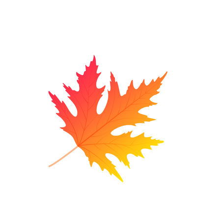 Maple autumn leaf vector isolated on white background  イラスト・ベクター素材