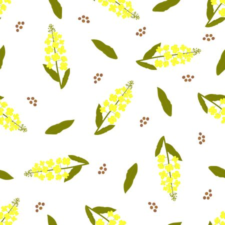 Yellow canola flower. Rapeseed plant seamless pattern Illustration
