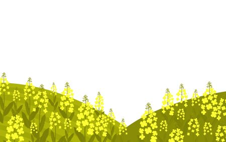 Blooming canola. Rapeseed grows in a meadow. Illustration