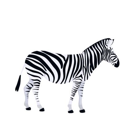 Zebra isolated on white background. African animal vector Иллюстрация