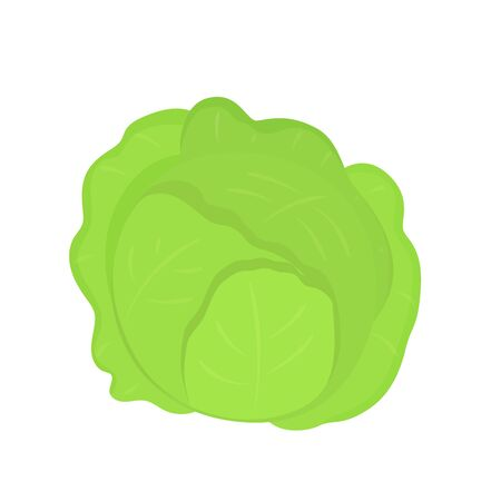 Fresh green cabbage vegetable isolated. Vector illustration in flat style.