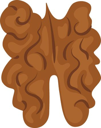 Vector walnut isolated isolated on transparent background. Vector illustration