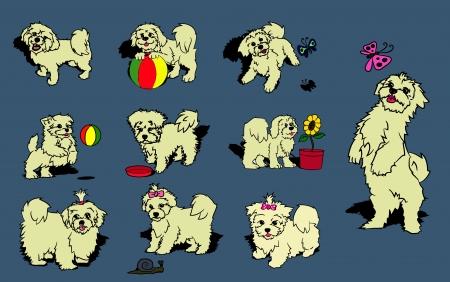 maltese dog: Maltese Dog Set Illustration
