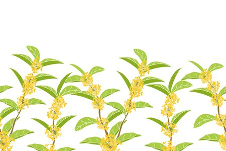 Flowering tree background and borders with fragrant tea olive, sweet olive or osmanthus fragrans. Vector Illustration