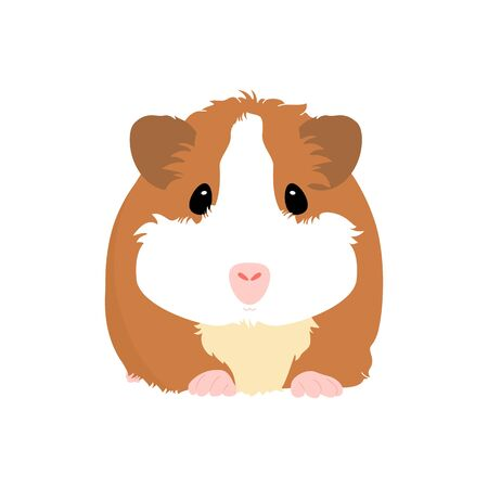 Adorable pet guinea pig or cavy isolated on white background. Cute cartoon mouse or small rodent. Childish  illustration. Illustration