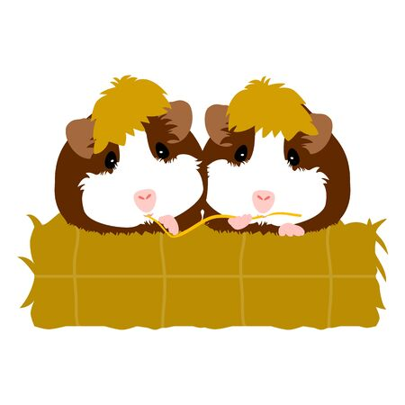 Cartoon guinea pigs eating hay together isolated on white background. Cute adorable mice are friends and eating on the hay. Illustration