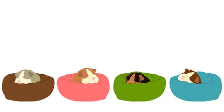 Cute mouse sleeping background and borders. Doodle guinea pig sleeping in the bed background. Illustration