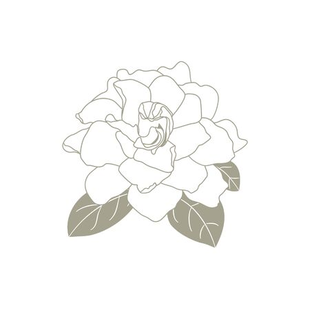 Gardenia jasminoides or Cape jasmine flower outline isolated on white background. Tropical fragrant plant Gardenia in hand drawn style for icon, logo, card, symbol design.