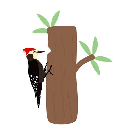 Forest bird. Cartoon woodpecker pecking on tree trunk isolated on white background. Cute funny bird icon, woodland animal.