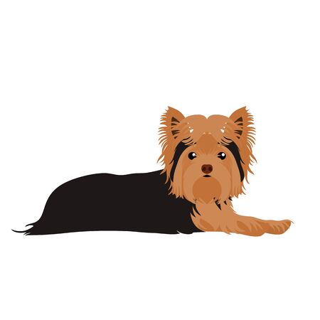 Yorkshire terrier lying down isolated on white background. Cartoon yorkie dog puppy icon vector. Hand drawn childish vector illustration. Great for icon, symbol, logo, children's book.