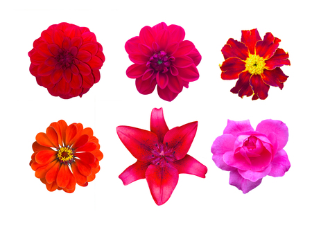 roze: Set of red garden flowers isolated. marigold, Dahlir . Lily and zinnia
