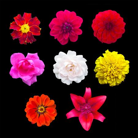 roze: Set garden flowers isolated. marigold, Dahlir . Lily and zinnia. Rose Stock Photo