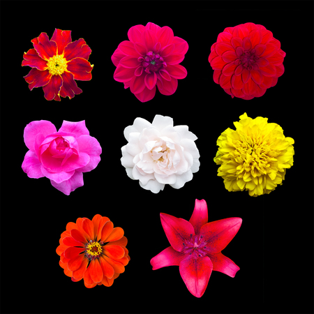 Set garden flowers isolated. marigold, Dahlir . Lily and zinnia. Rose Stock Photo