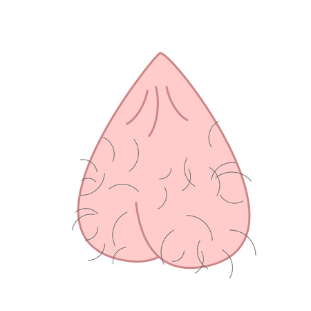 Scrotum cartoon isolated. Mans balls Hairy. Vector illustration