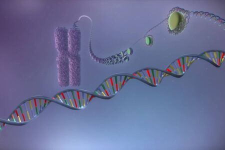 Image of the structure of chromosome and dna molecules, illustration of a molecule