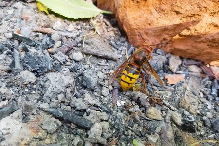 A battered hornet on the ground comes to life.