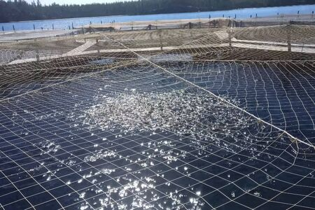 Fish farm on the lake, covered with a net. Foto de archivo
