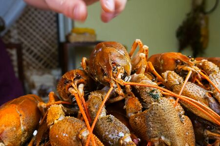 Live crayfish on the table. Cooking crayfish. Stock Photo