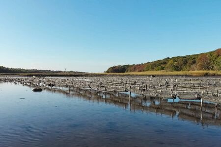 Oyster farm at the pond. Cells for growing oysters. 写真素材