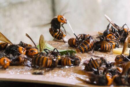 Hunting for hornets using rat glue. Sticking hornets Stock fotó