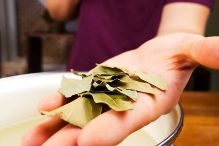 Leaves of bay leaf in the cook's hand. Seasoning bay leaf 免版税图像