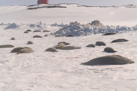Seals on the coast of Antarctica. Seals on the coast of Antarctica.