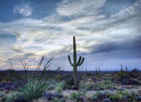 Nice spring desert nature scene in Saguaro National Park, Arizona, Sauaros, Ocatilla, Prickly Pear and Palo Verde Trees.