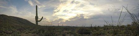 Nice spring desert nature scene in Saguaro National Park, Arizona. Sauaros, Ocatilla, Prickly Pear and Palo Verde Trees.