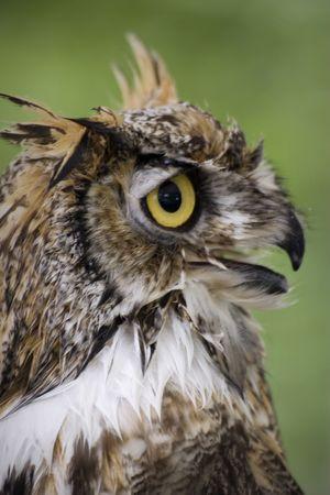 Themes: birds, wildlife, nature, wisdom, backgrounds