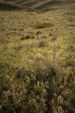 Themes: desert, prairie, spring, gardens, xeriscape, nature