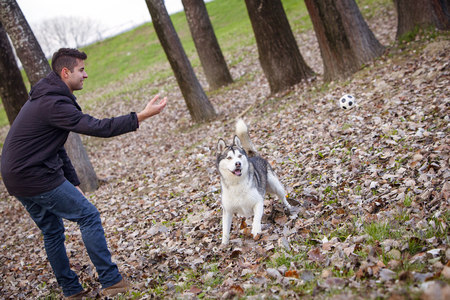 Man with dog playing outdoors, Croatia