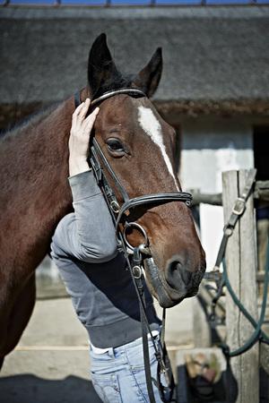 Person Holding Horses Head, Close-up, Baranja, Croatia, Europe LANG_EVOIMAGES