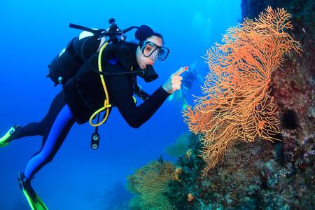 gorgonian sea fan: Diving, Sea Fan, Adriatic Sea, Croatia, Europe