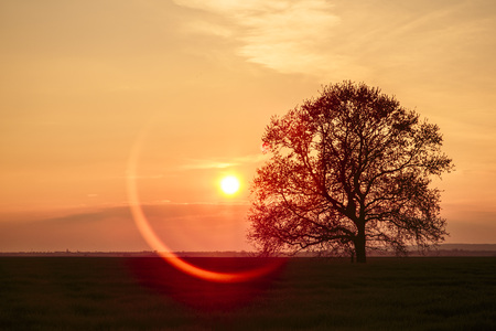 afterglow: Single tree against afterglow LANG_EVOIMAGES
